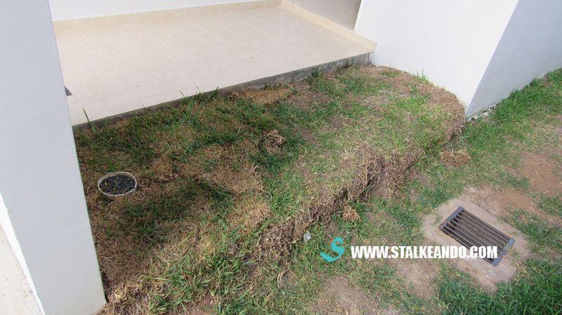 Stalkeando mini jard n para la entrada de la casa for Articulos jardin