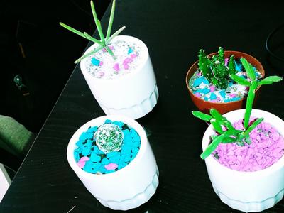 Cuidado de los Cactus en Apartamentos